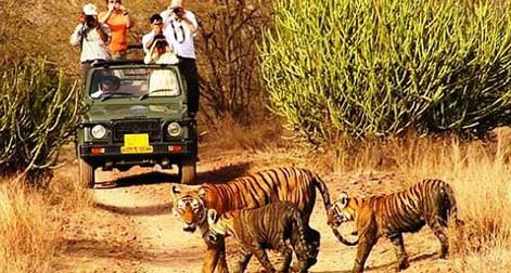 Best of Indian Wildlife Tour, India Wildlife Tours, South India Wildlife Tour