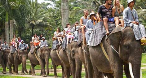 Wildlife Elephant Safari Tours in India,India Elephant Safari Travel