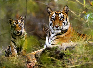 India wildlife tours packages,Indian National Park Tours