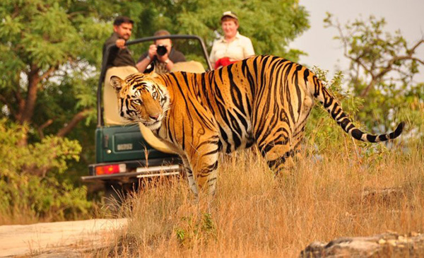 best-of-Indian-wildlife-tour