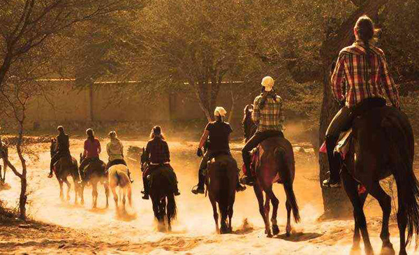 horse-safari-rajasthan-tour